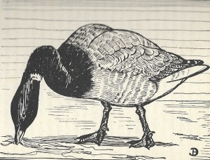 The Brent Goose